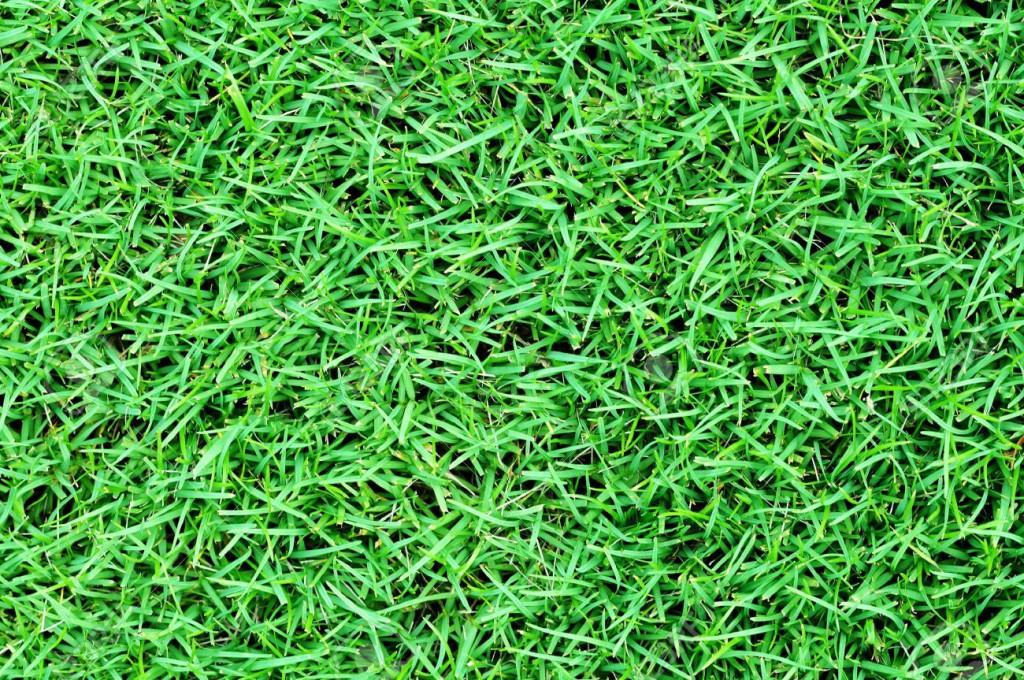 9393123-Green-grass-field-background-Stock-Photo